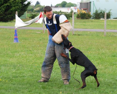 Dressage pour chien au domaine de Thierache